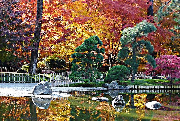 Autumn Glow In Manito Park Print by Carol Groenen