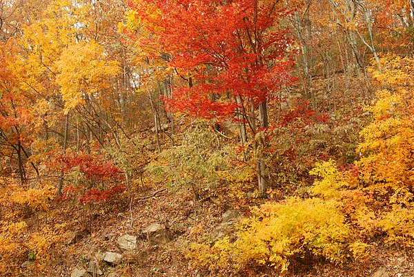 Stephen  Vecchiotti - Autumn In Shenandoah