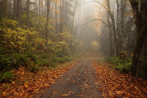 Autumn Lane Print by Mike  Dawson