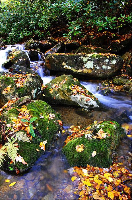 Autumn Monongahela National Forest Print by Thomas R Fletcher