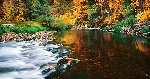 Autumn On The Merced River Yosemite Np Print by Edward Mendes