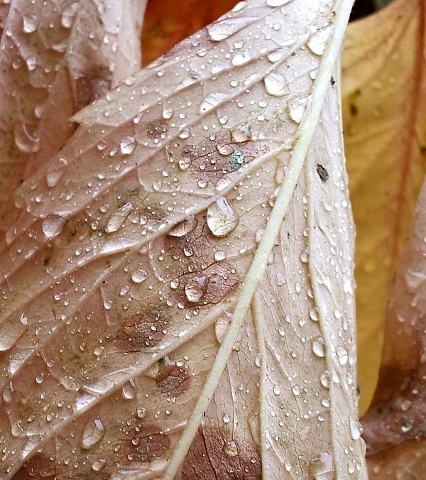 Autumn Rain Print by Alpha Pup