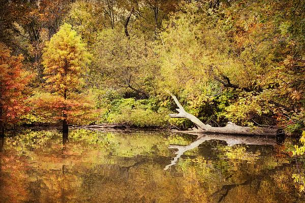 Cheryl Davis - Autumn Reflection