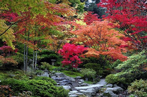 Emerita Wheeling - Autumn Serenity
