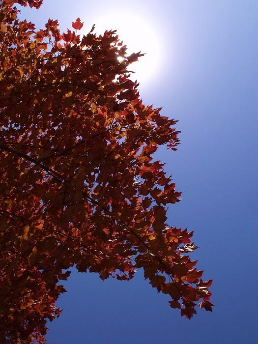 Autumn Sky I Print by Anna Villarreal Garbis