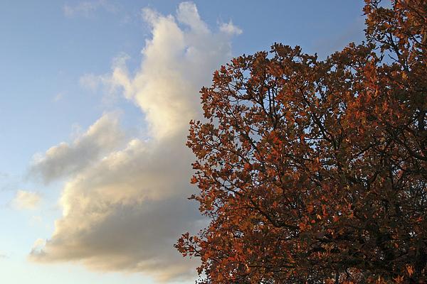 Autumn Sky Print by Jeannie Burleson