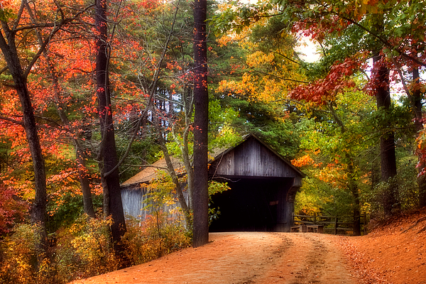 Autumn Wonder Print by Joann Vitali