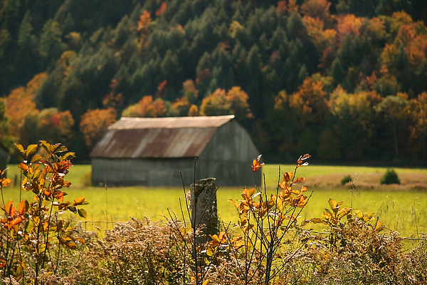 Autumns Colors Print by Sandra Cunningham