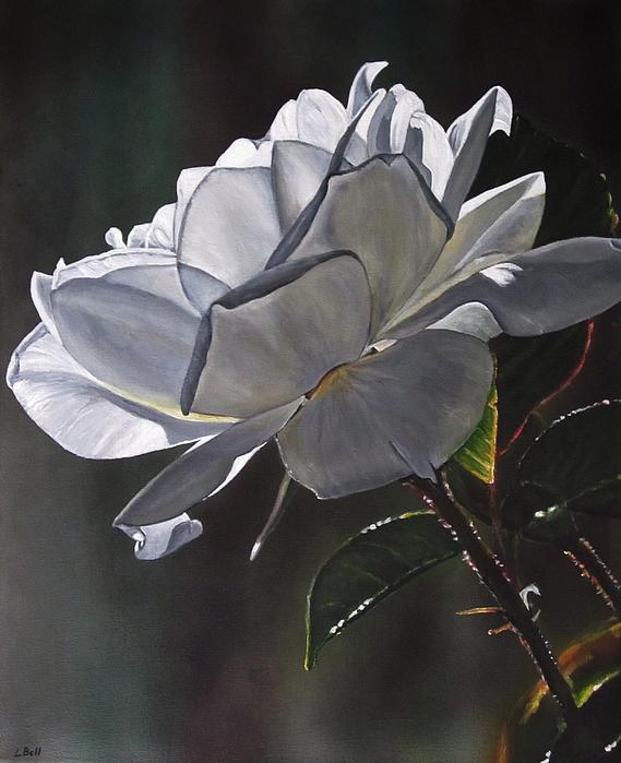 backlit white rose by lillian bell. Black Bedroom Furniture Sets. Home Design Ideas