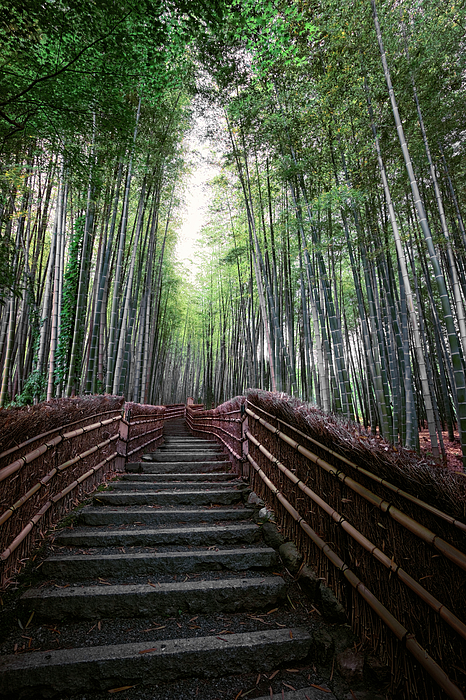 Bamboo Forest Of Japan Print by Daniel Hagerman