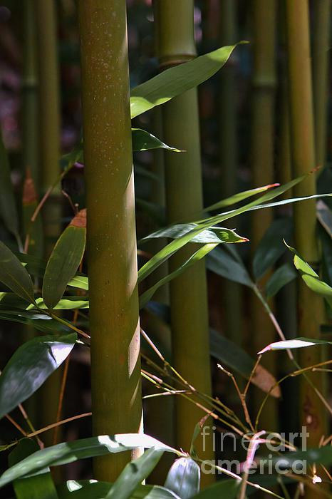 Frank Wicker - Bamboo Stalks