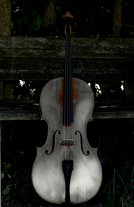 Barnyard Cello Print by Steven  Digman