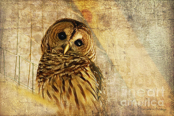 Barred Owl Print by Lois Bryan