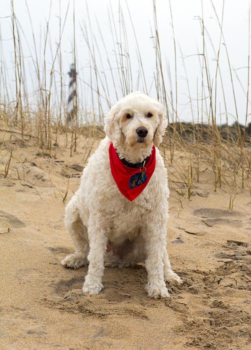 Marion Johnson - Beach Dog