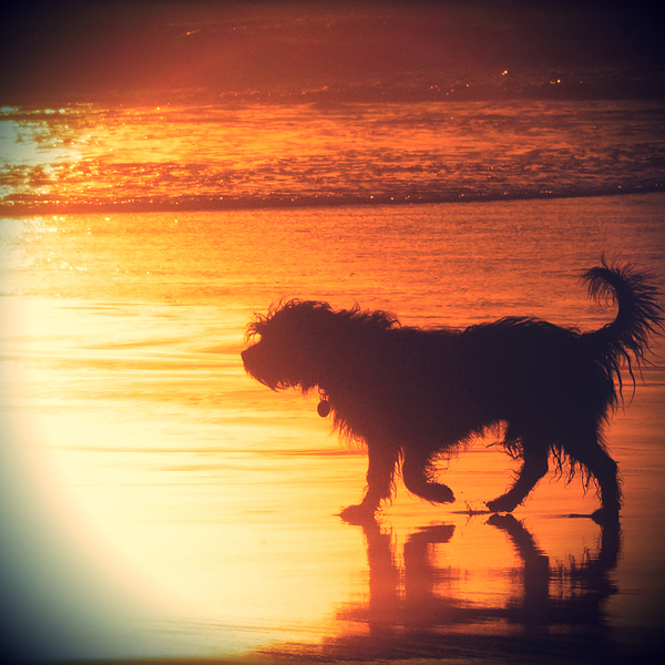 Beach Dog Print by Paul Topp