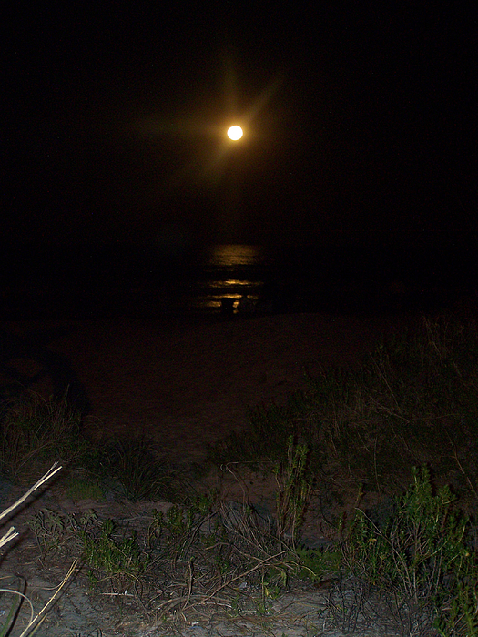 Beach Full Moon Print by Patricia Taylor