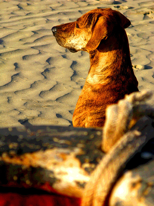 Beach Pooch By Michael Fitzpatrick Print by Olden Mexico