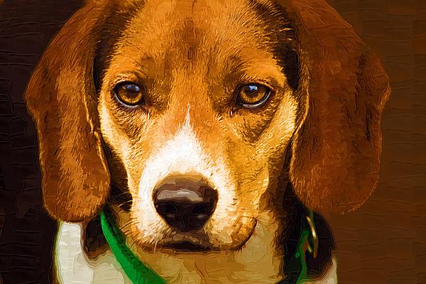 Beagle Hound Dog In Oil Print by Kathy Clark
