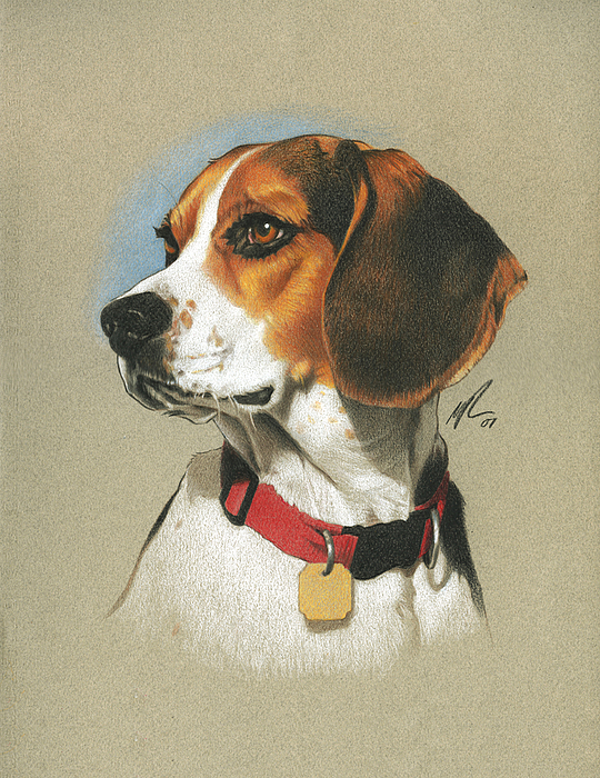 Beagle Print by Marshall Robinson