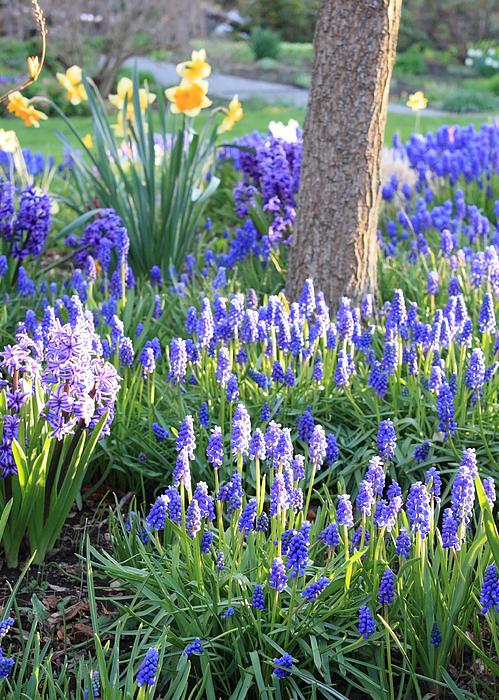 Beautiful Spring Day Print by Carol Groenen