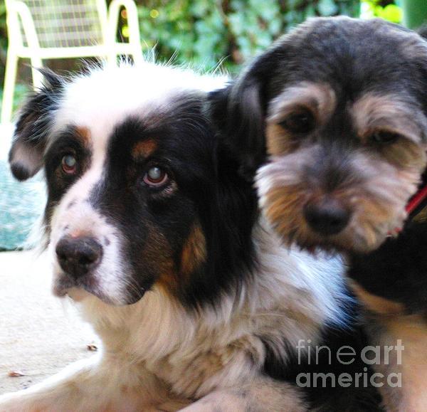 Hazel Holland - Beloved Pets