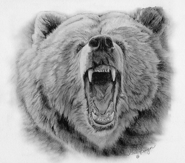 28 Collection of Grizzly Bear Side View Drawing  High