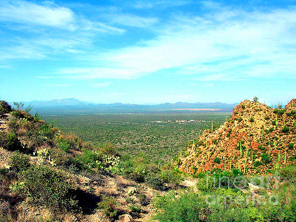 Merton Allen - Beyond Seguara National Forest Arizona