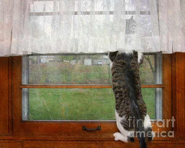 Andee Design - Bird Watching Kitty Cat