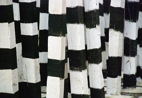 Blanco Y Negro Print by Skip Hunt