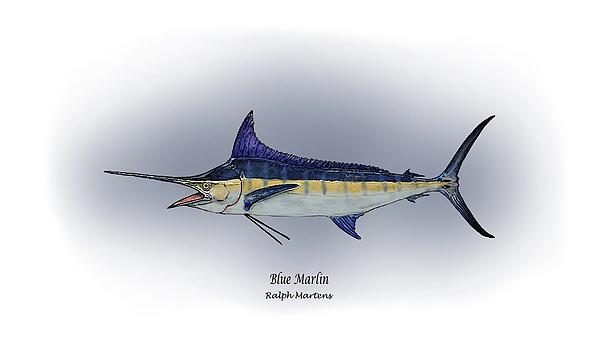 Blue Marlin Print by Ralph Martens