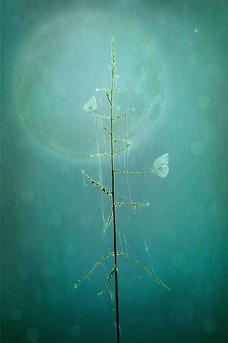 Marina Kojukhova - Blue Moon