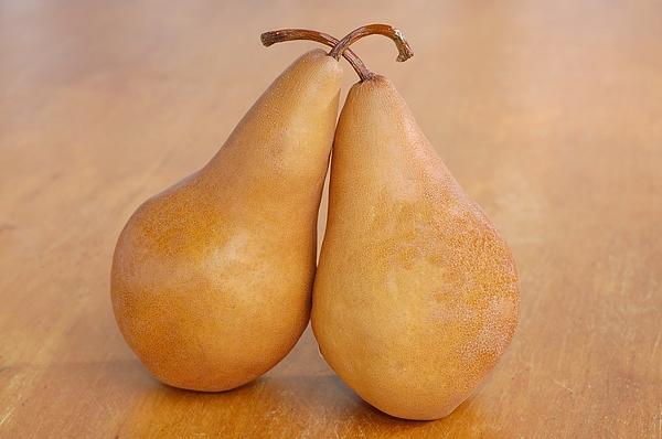 Bosc Pears Still Life Print by Tanis Saucier