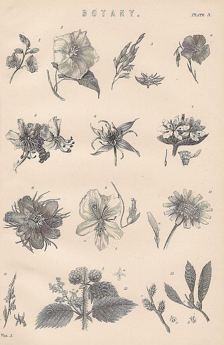 botany for the artist pdf