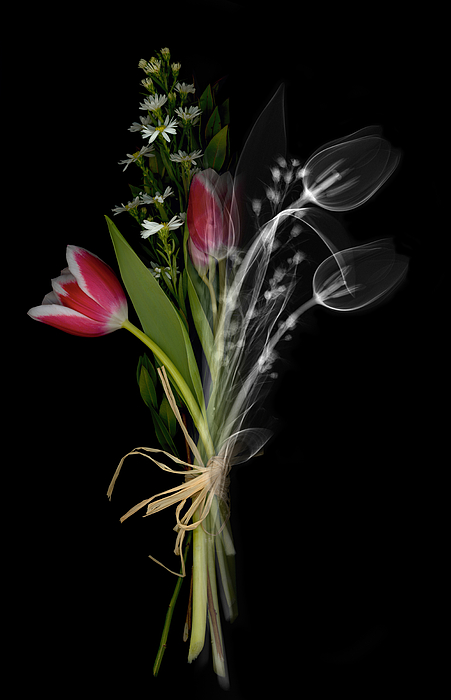 Bouquet X-ray Print by Ted Kinsman
