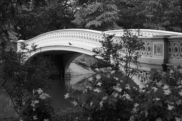 Bow Bridge In Central Park Print by Christopher Kirby