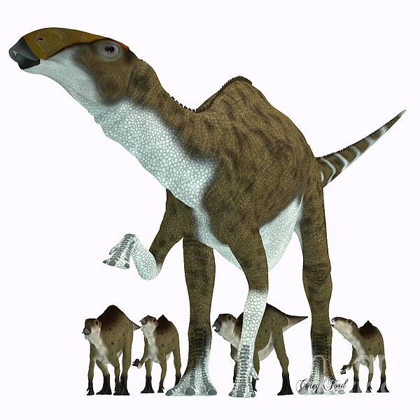 Brachylophosaurus Herb...
