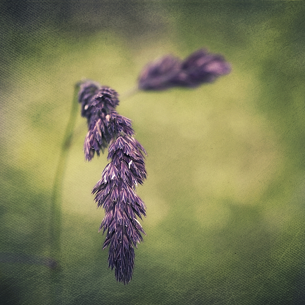 Brin D'herbe Print by Angela Doelling AD DESIGN Photo and PhotoArt