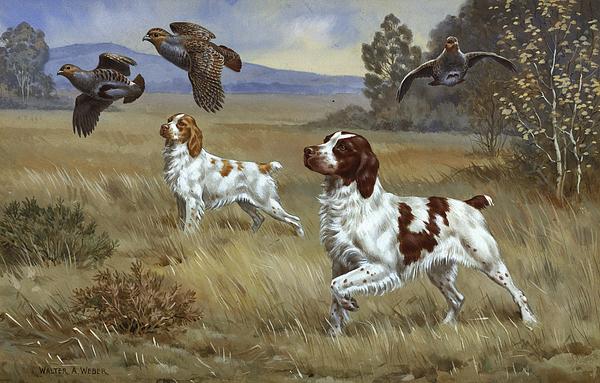 Walter A. Weber - Brittany Spaniels Flush Three Birds