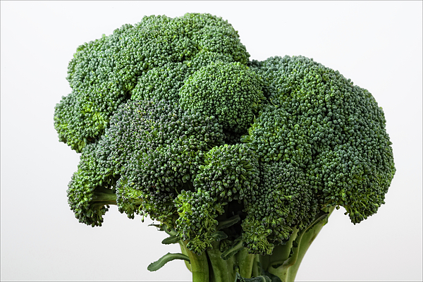 Broccoli Print by Robert Ullmann