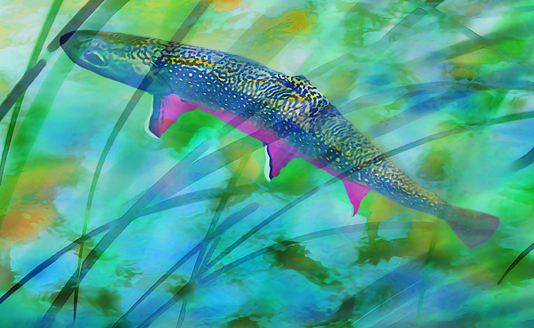 Brook Trout In The Stream Print by Terril Heilman