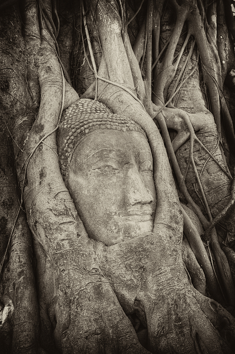 Buddha Head In Tree Print by Fototrav Print