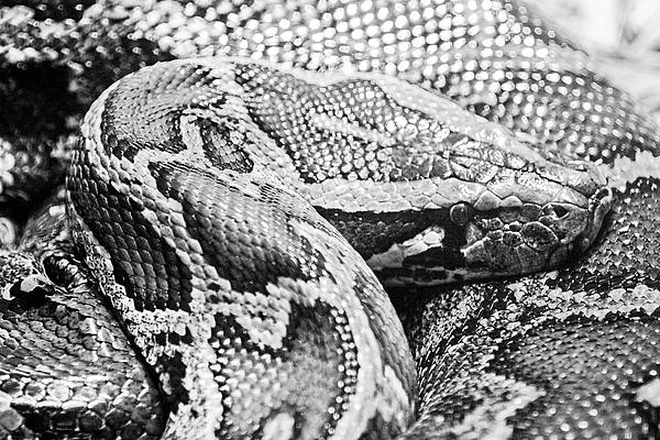 python in a day pdf