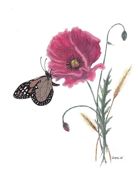 Stanza Widen - Butterfly Dreaming