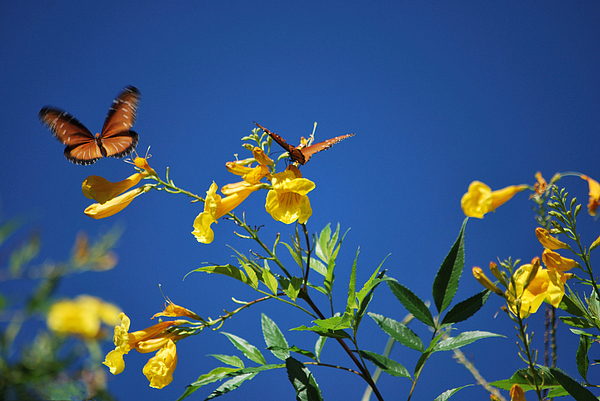 Butterfly In The Sonoran Desert Musuem Print by Donna Van Vlack