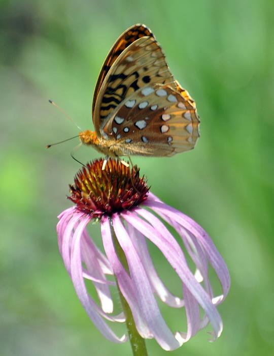 Butterfly In The Wind Print by Marty Koch