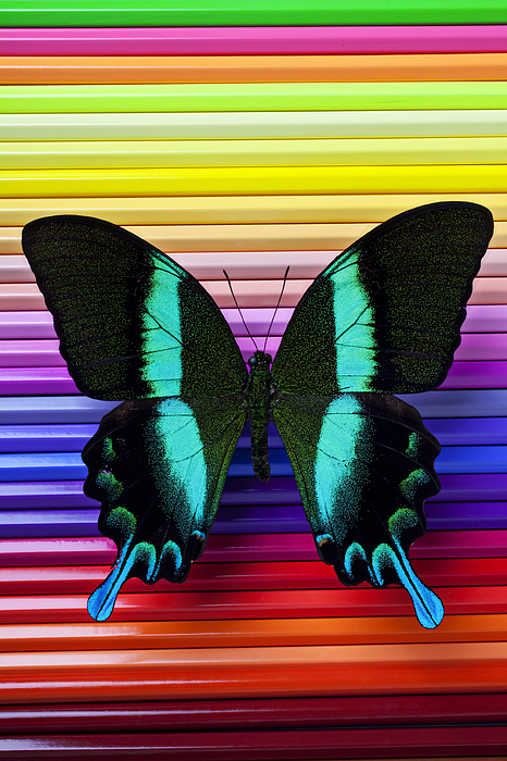 Butterfly On Colored Pencils Print by Garry Gay