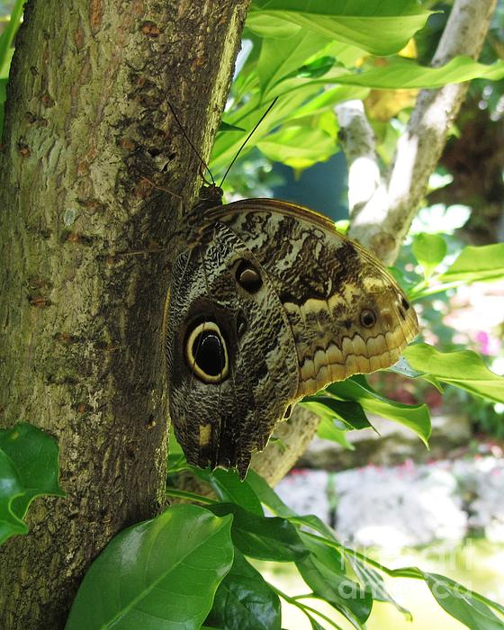Camo Butterfly by Daniel Diaz