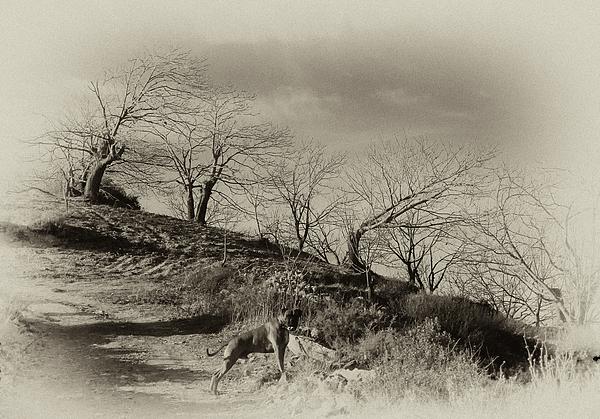 Campo Dog Print by Kenton Smith