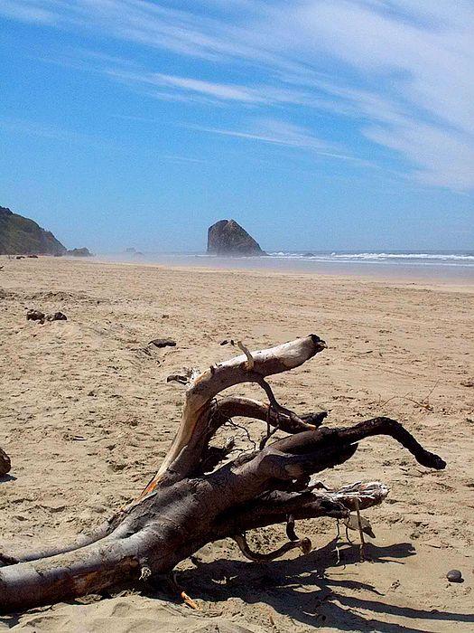 Cannon Beach Driftwood Print by Lori Seaman
