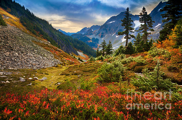 Cascade Pass Fall Print by Inge Johnsson